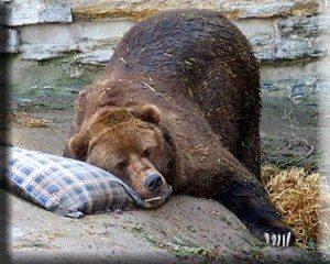 Sleepybear2