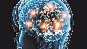 brain image harvard study